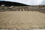 Nouvelle vigne de Petite Arvine sur les hauts du Clos de Tsampéhro.