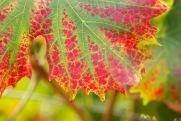 L'automne s'annonce...