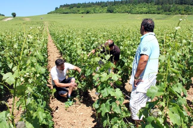 Bourgogne 53